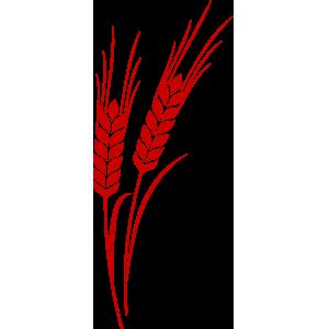 Linea crusche